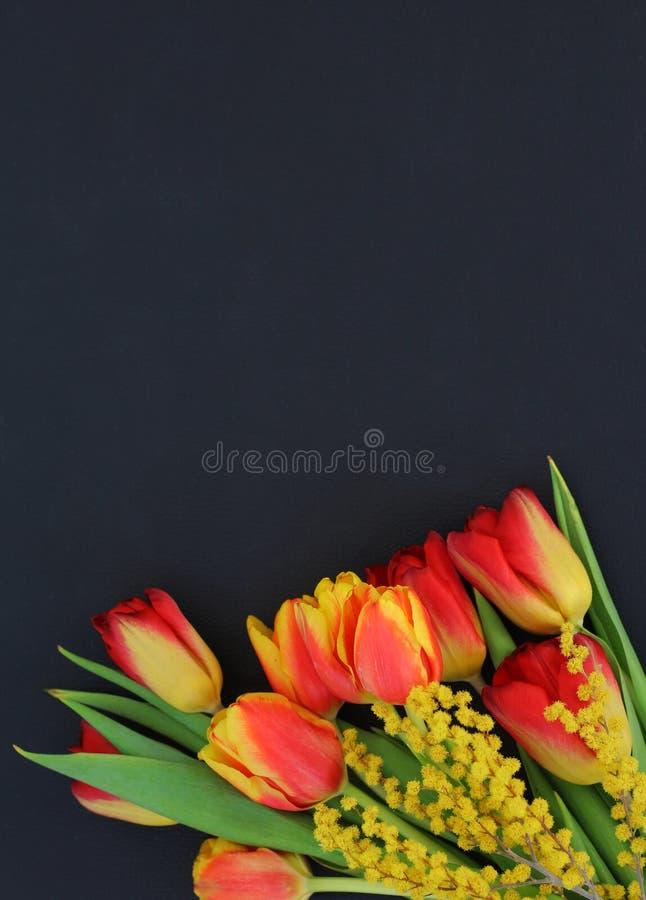 明亮的郁金香和含羞草花束在黑暗的皮肤背景 免版税图库摄影