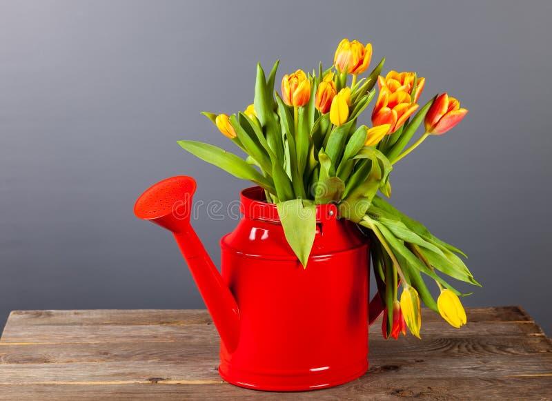 明亮的郁金香花束在一把红色喷壶的在黑暗的背景 库存照片