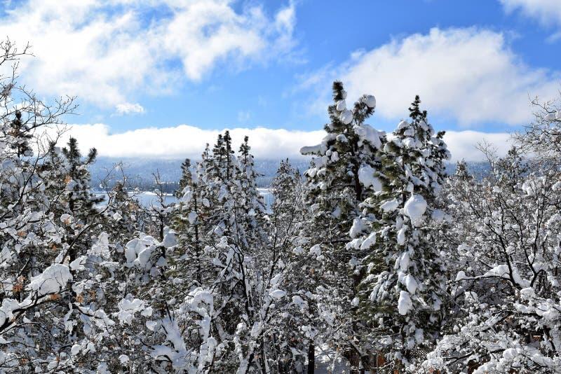 明亮的雪天 免版税库存图片