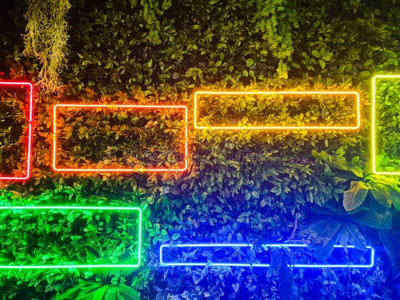 明亮的霓虹灯和绿草背景 库存图片