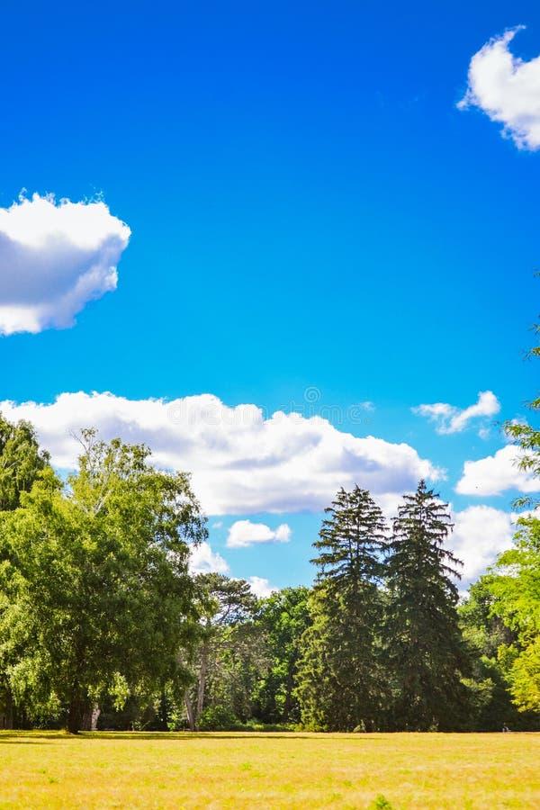 明亮的领域草甸树杉树天空覆盖拷贝空间 图库摄影
