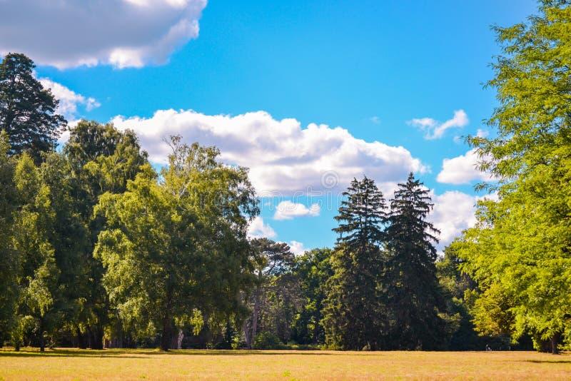 明亮的领域草甸树杉树天空覆盖拷贝空间 库存图片