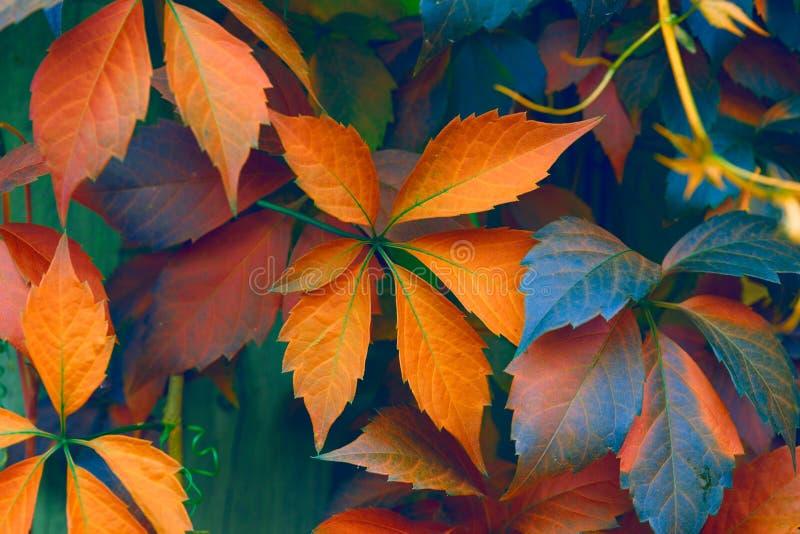 Download 明亮的颜色 库存图片. 图片 包括有 室外, 靠山, 叶子, 工厂, 绿叶, 照亮, artsiest, 陆运 - 59102359