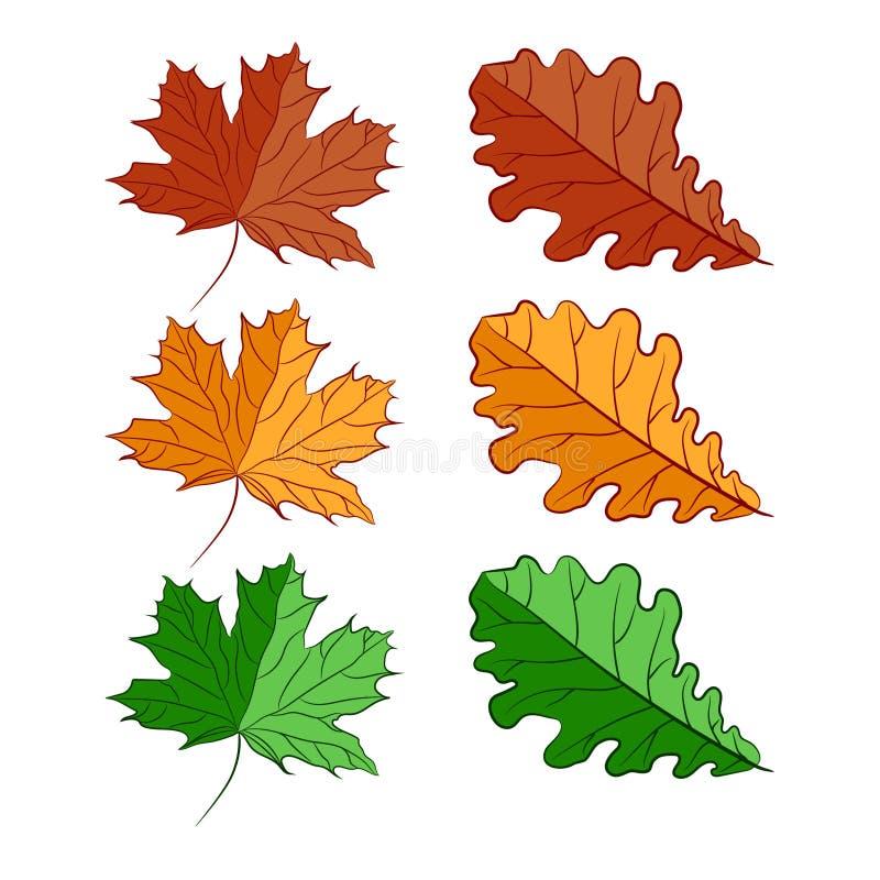 明亮的黄绿色秋叶秋天树 查出的对象 库存例证