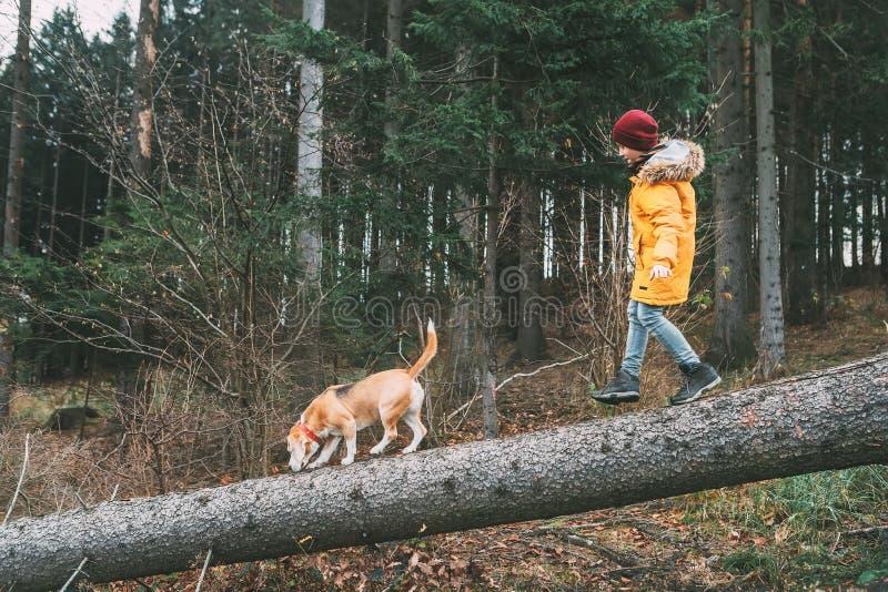 明亮的黄色附头巾皮外衣的男孩走与他的在杉木的小猎犬狗为 免版税库存照片
