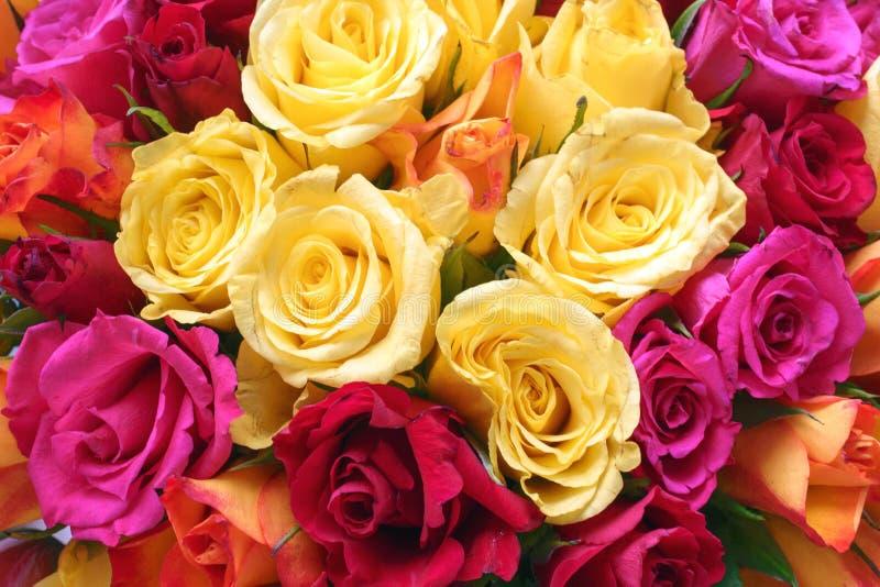 明亮的黄色,橙色,红色和桃红色玫瑰背景花束  免版税库存照片