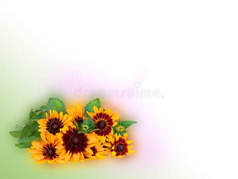 明亮的黄色黄金菊或被隔绝的黑眼睛的苏珊花 免版税库存图片