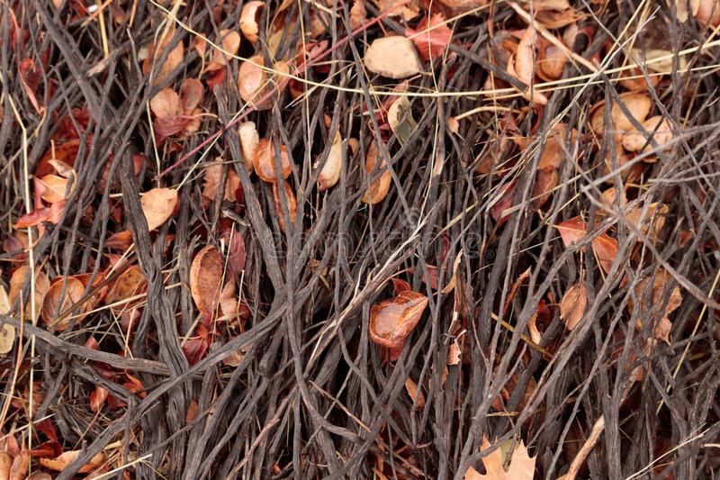 明亮,湿,秋天黑橡树和小橡树在被研的森林离开与棍子和枝杈鞋带  免版税库存照片