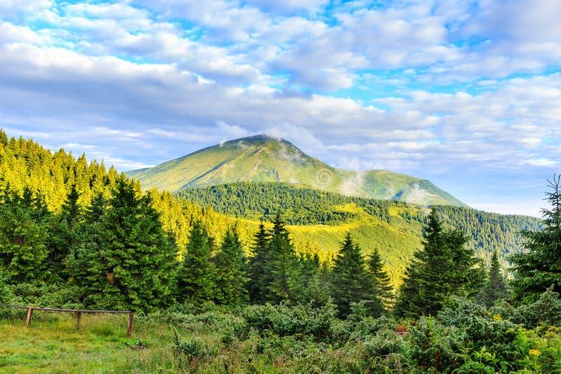 明亮,美丽如画的喀尔巴阡山脉使,观看佩特罗斯登上,乌克兰环境美化 库存照片