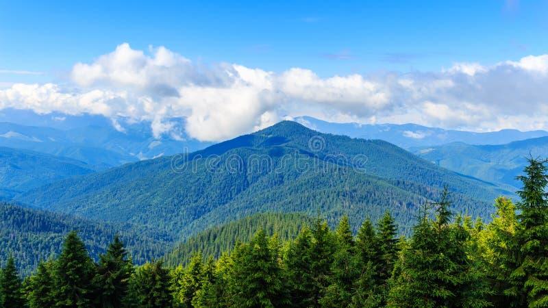 明亮,美丽如画的喀尔巴阡山脉风景 Chornogora土坎,乌克兰,欧洲 免版税库存照片