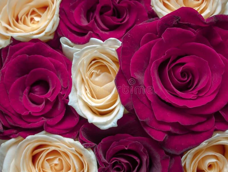 明信片的,日历红色和黄色花卉玫瑰背景 图库摄影