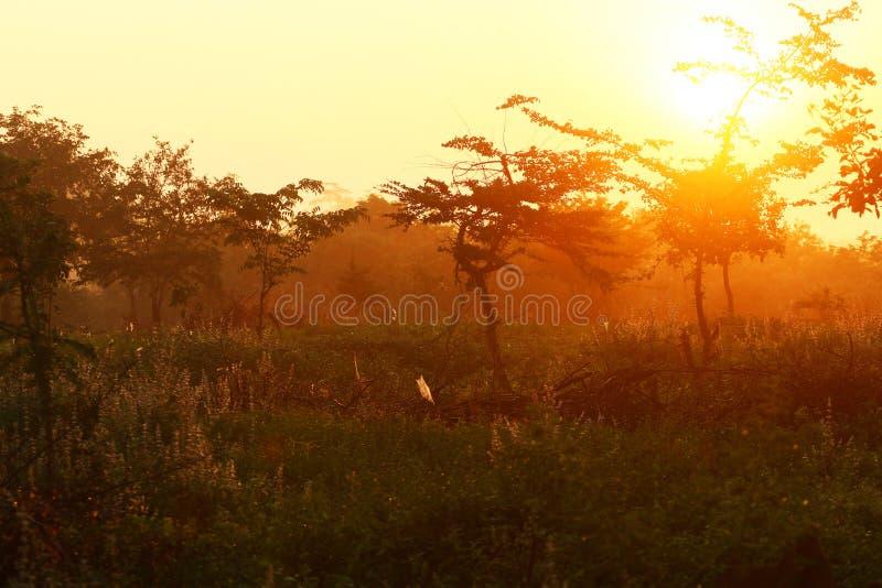 黎明在森林里 库存图片