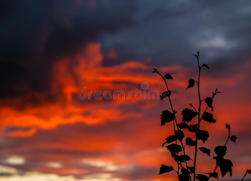黄昏在芬兰 库存照片