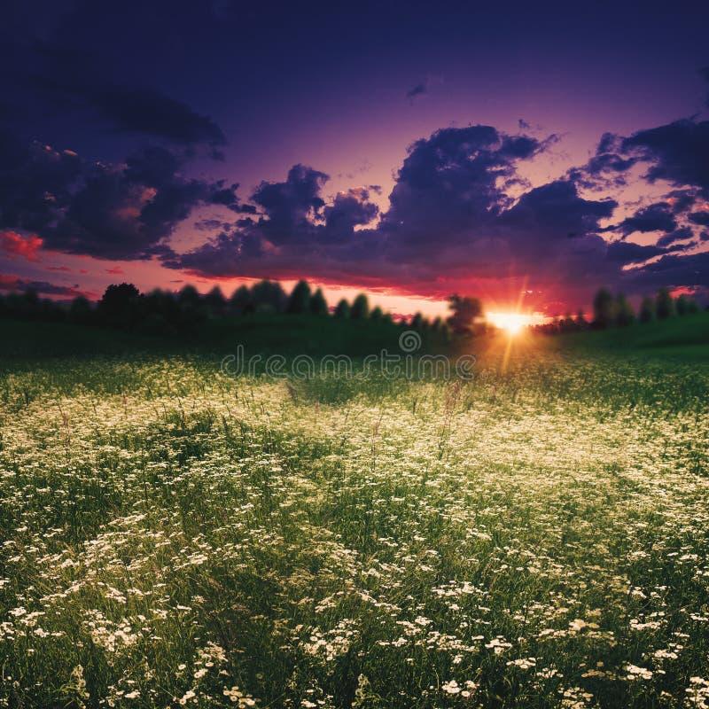 黄昏的夏天草甸 免版税图库摄影