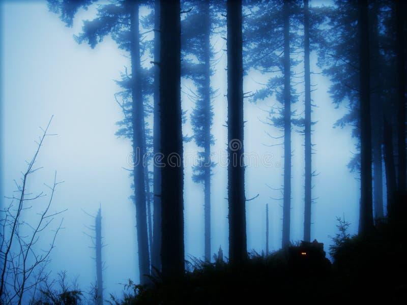 黄昏的森林 库存照片