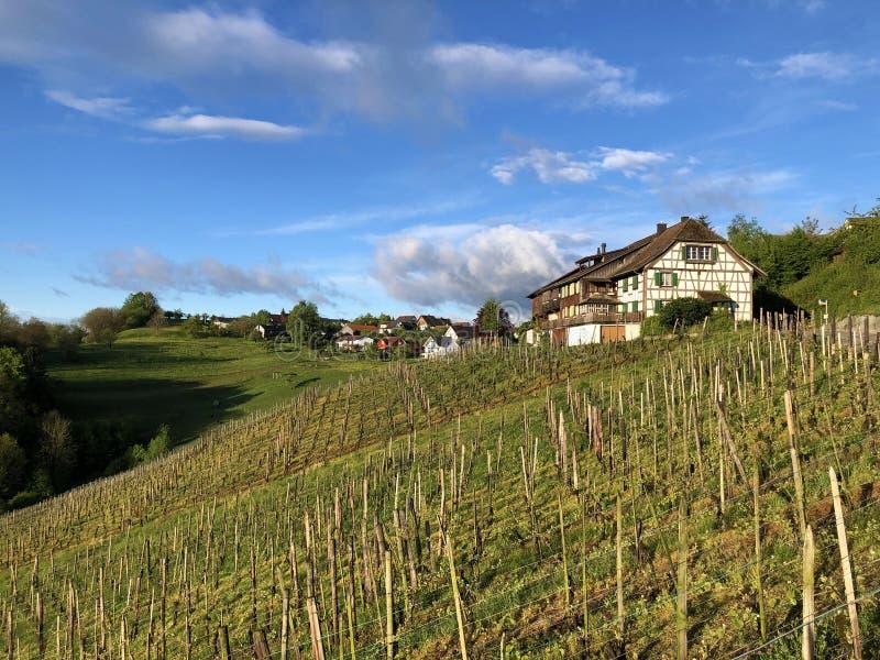 易上镜头的葡萄园在Buchberg村庄  免版税图库摄影