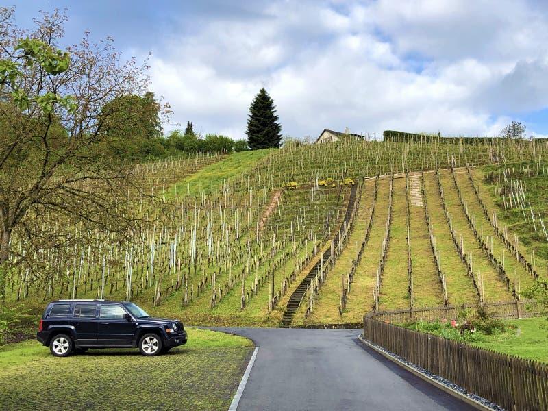 易上镜头的葡萄园在Buchberg村庄  免版税库存图片