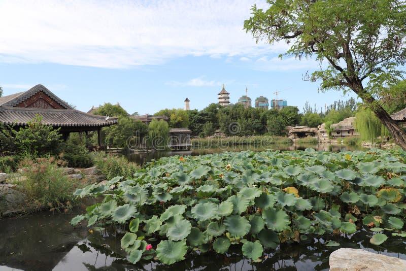 星期天下午北宁市公园天津华北 库存照片