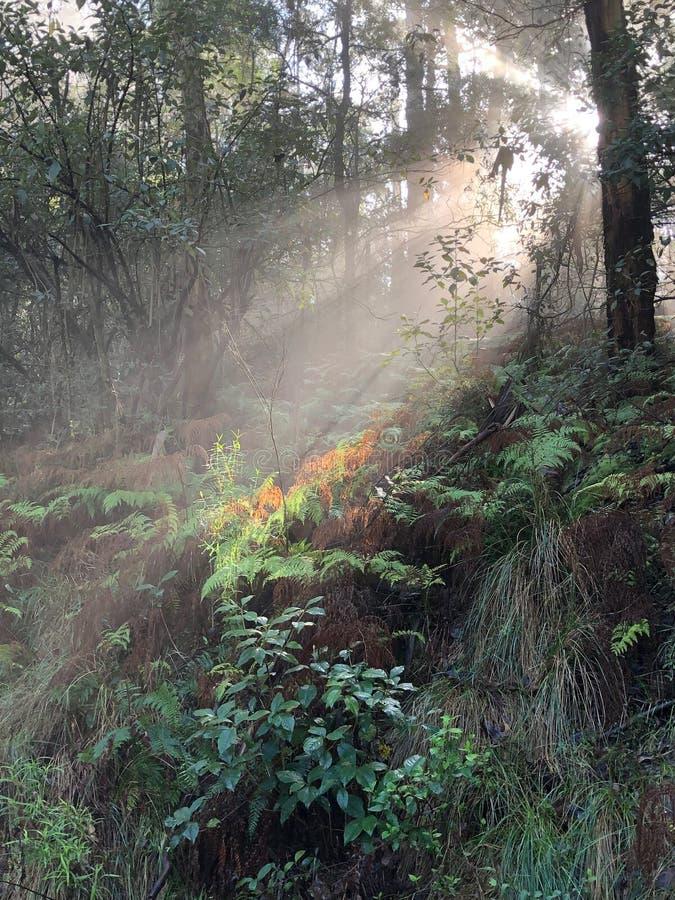 星期天早晨光在森林里 库存照片