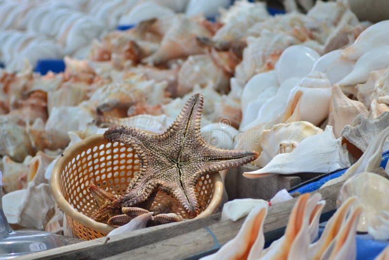 星鱼和壳 库存图片