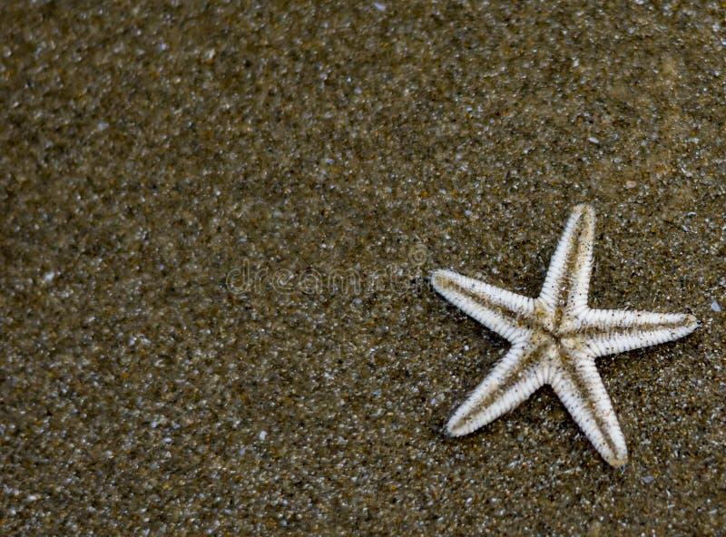 星鱼小在海滩沙子 免版税图库摄影
