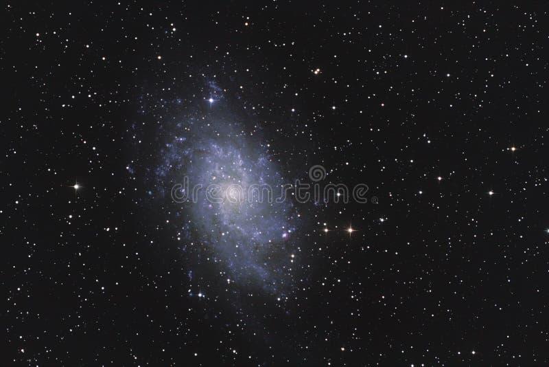 星系M33 免版税库存照片