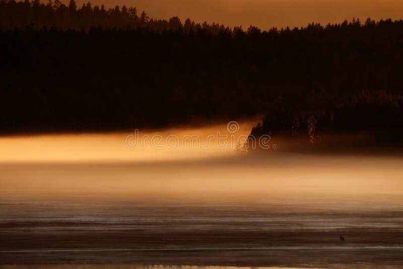 春夜在雾中的森林湖 库存照片