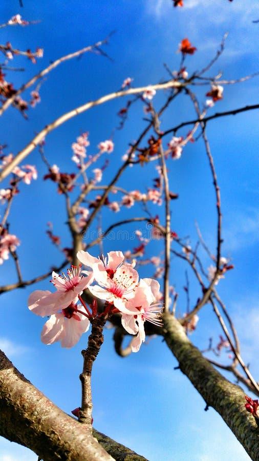 春天…上升了叶子,自然本底 免版税图库摄影
