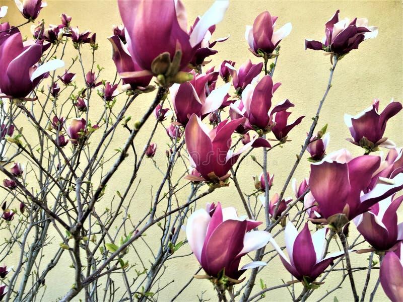春天、花、幸福和颜色 库存图片