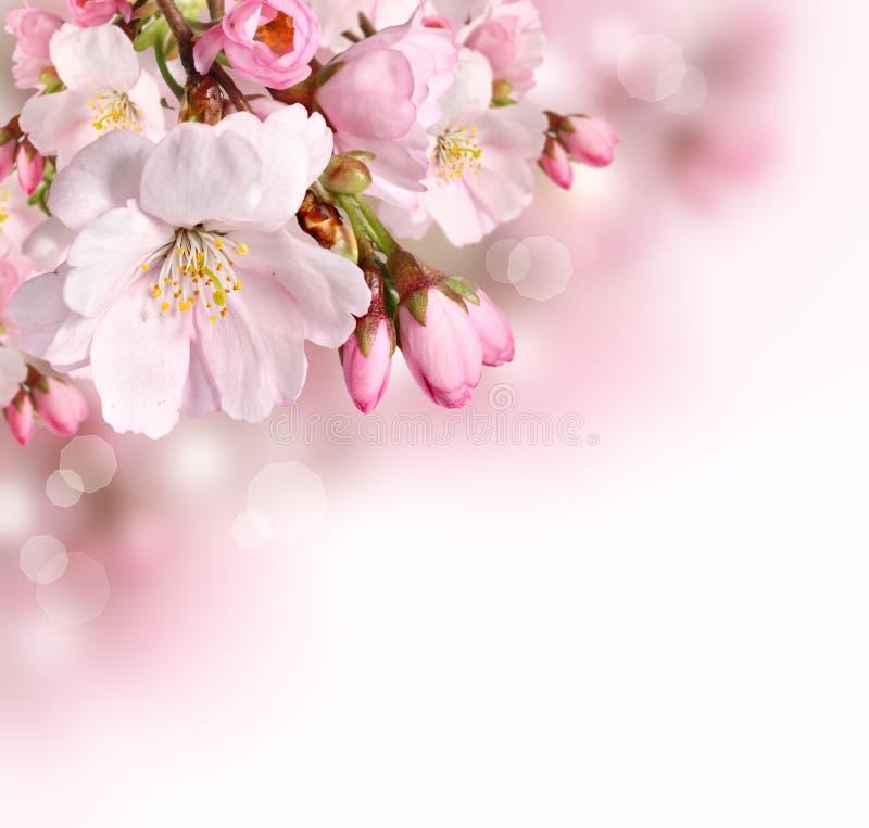 春天与桃红色开花的边界背景 免版税库存图片
