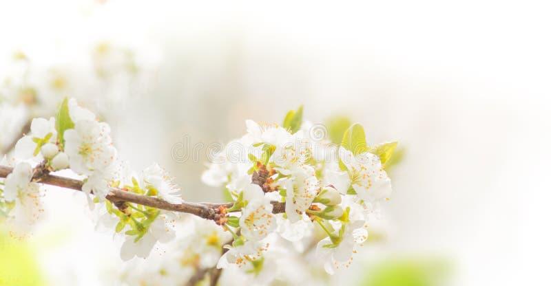 春天与桃红色开花的边界背景 免版税图库摄影