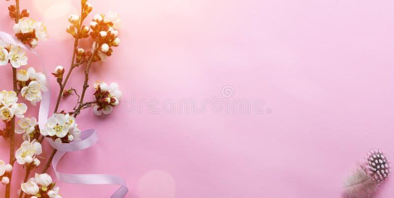 春天与桃红色春天树开花的边界或背景艺术 在桃红色背景的美好的新开花的树枝 免版税库存图片
