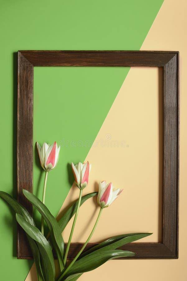 春天与框架的郁金香花在绿色和米黄颜色背景 E 库存图片