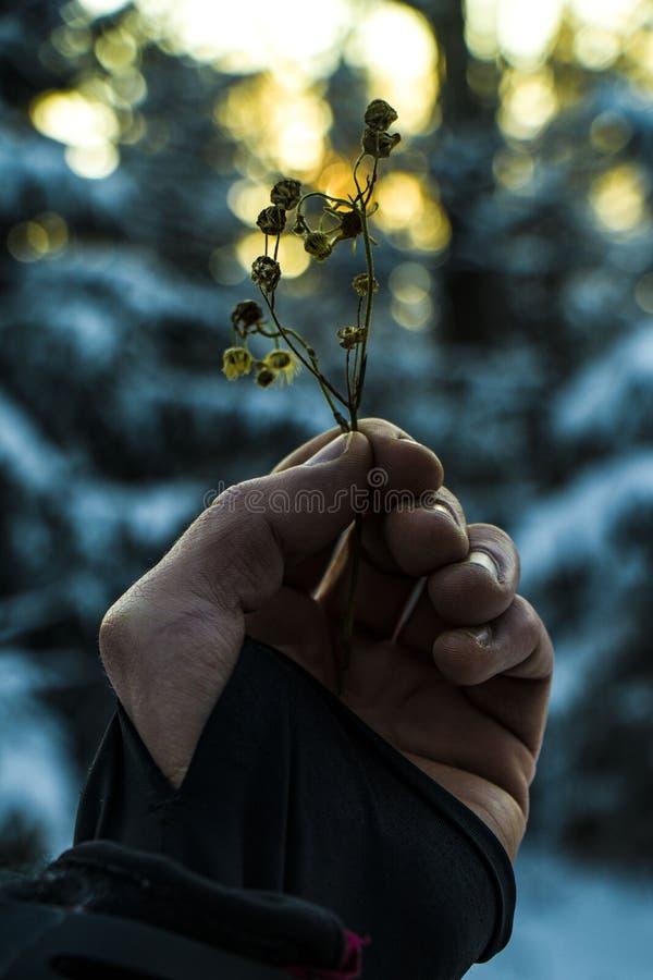 春天与水下落的Snowdrop花在太阳和被弄脏的Bokeh光背景的春天森林  免版税库存照片