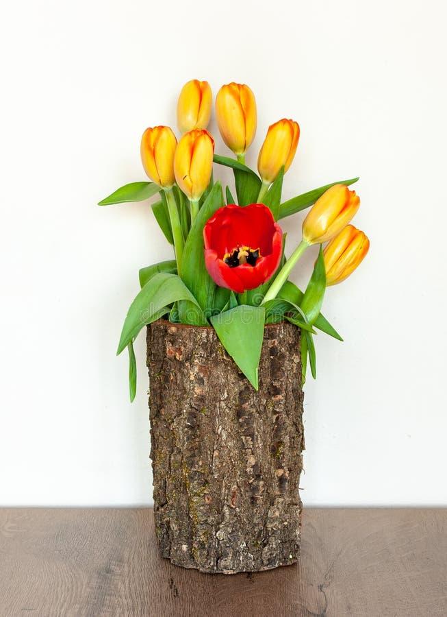春天与黄色郁金香和唯一红色郁金香的花的布置 库存照片