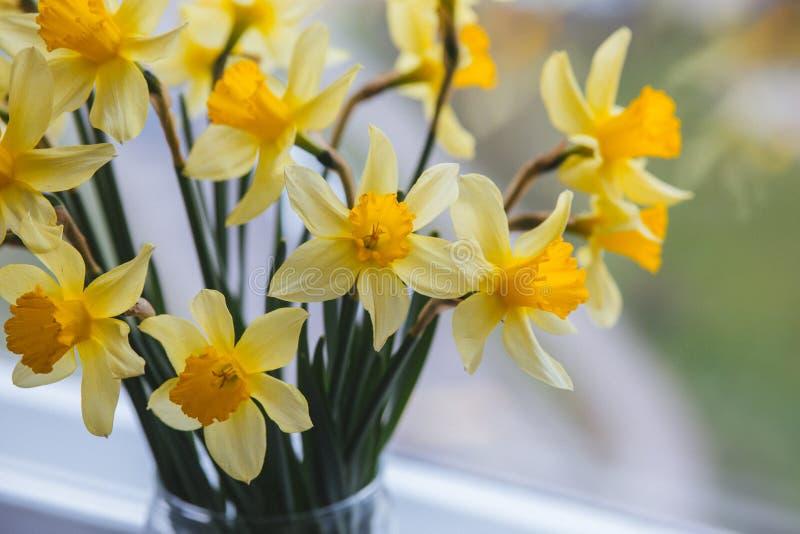 春天与黄水仙的复活节背景在窗口的桶 黄色水仙或黄水仙花 免版税库存图片