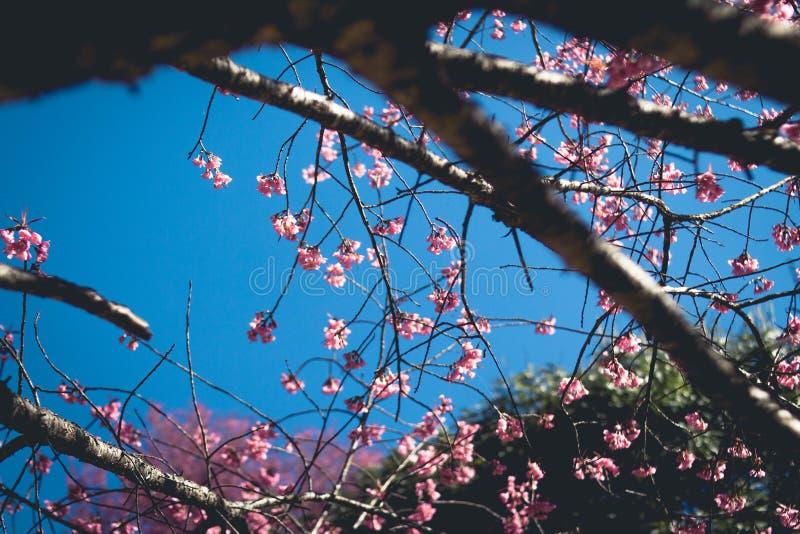 春天你好春天桃红色花在森林里 库存照片