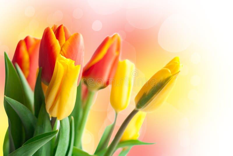 春天假日卡片 黄色和红色郁金香 图库摄影