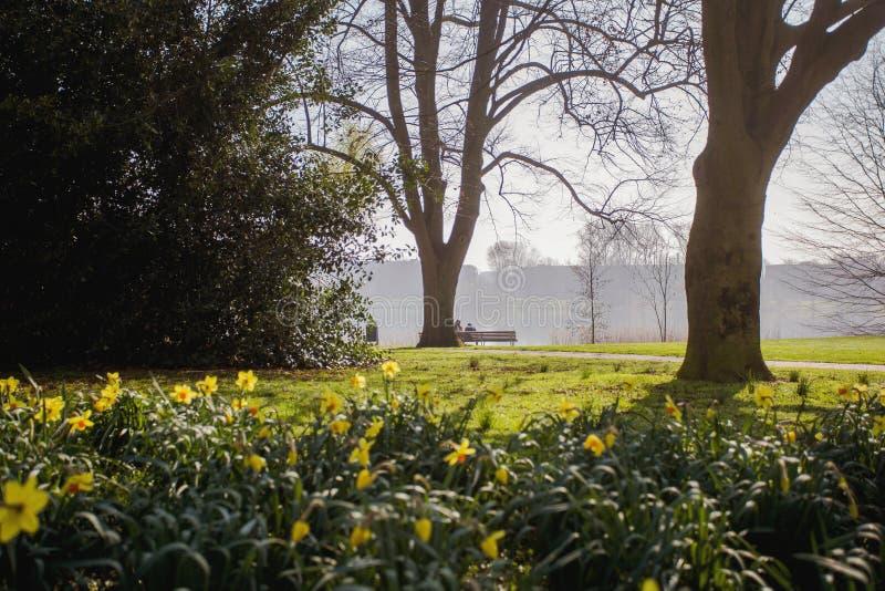 春天公园,在前景,两人基于长凳的在公园,五颜六色的风景的黄色花 免版税图库摄影