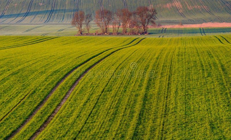 春天农村风景,滚动的青山 免版税库存图片