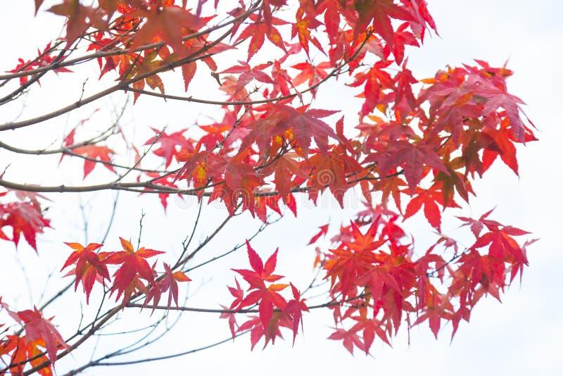 春天变动颜色 库存图片