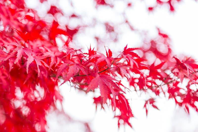 春天变动颜色 免版税库存图片