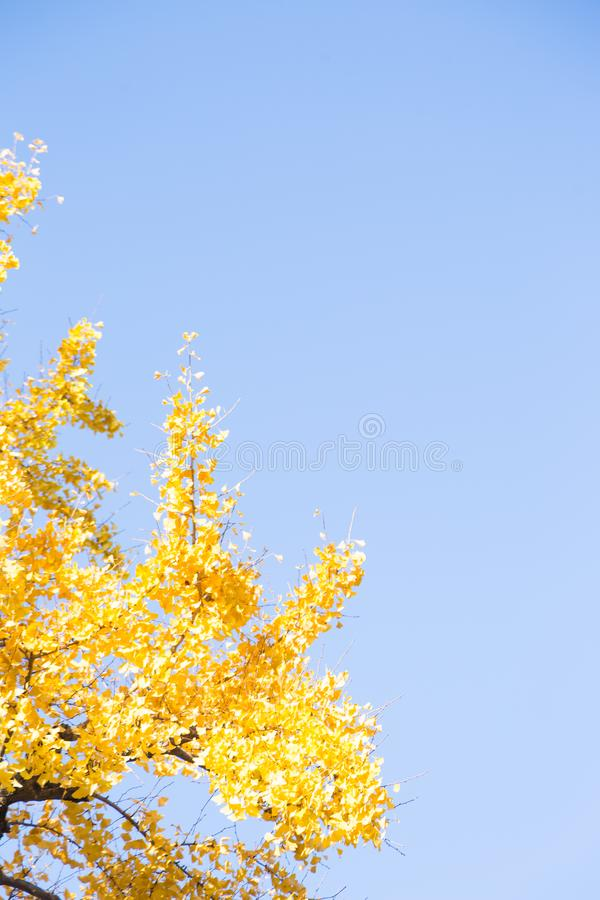 春天变动颜色 库存照片