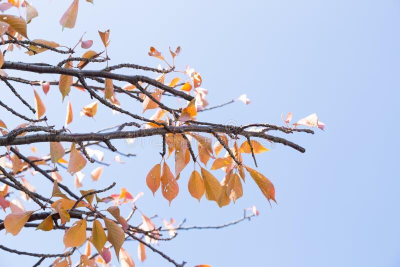 春天变动颜色 图库摄影
