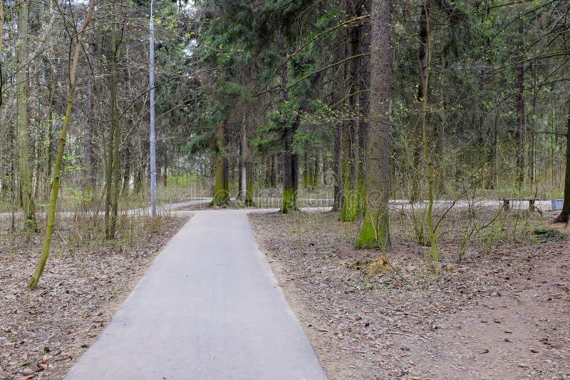 春天叶子在公园 免版税图库摄影