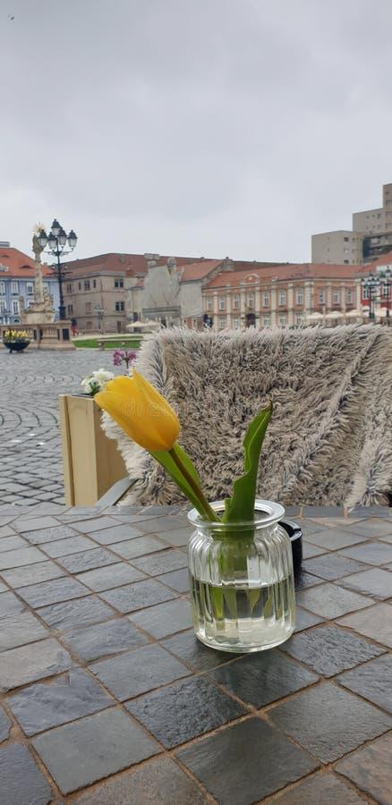春天周末早晨在蒂米什瓦拉罗马尼亚在Unirii广场联合正方形的一个咖啡地方 免版税图库摄影
