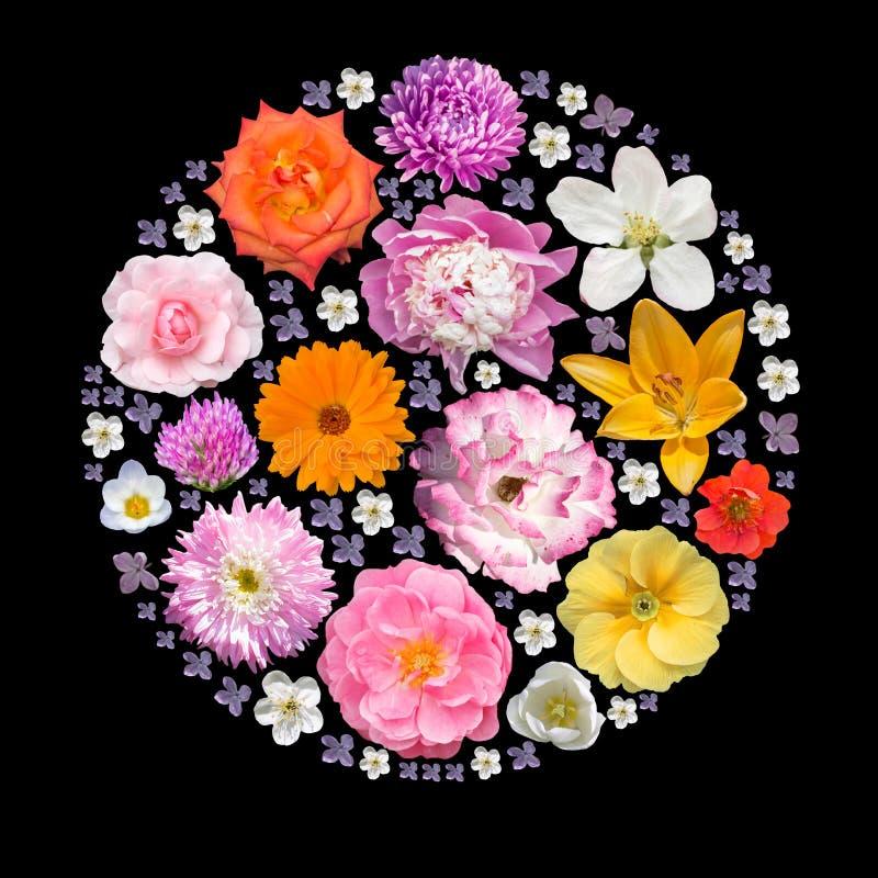 春天和夏天植物隔绝了拼贴画 免版税库存照片