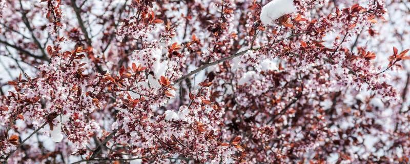 春天和雪 免版税库存图片