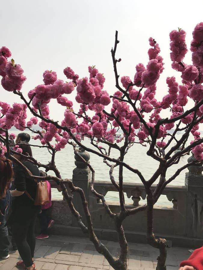 春天在中国 免版税库存图片