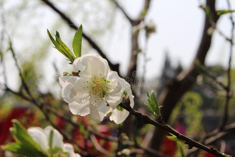 春天在兖州 库存图片